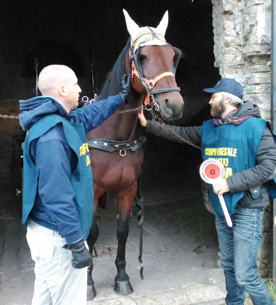 Da Testaccio a Castel di Sangro: due cavalli tornano in libertà grazie al Corpo Forestale