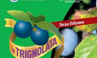 """Bagnoli del Trigno,  """"Prunus spinosa"""" sul palcoscenico della Trignolata"""