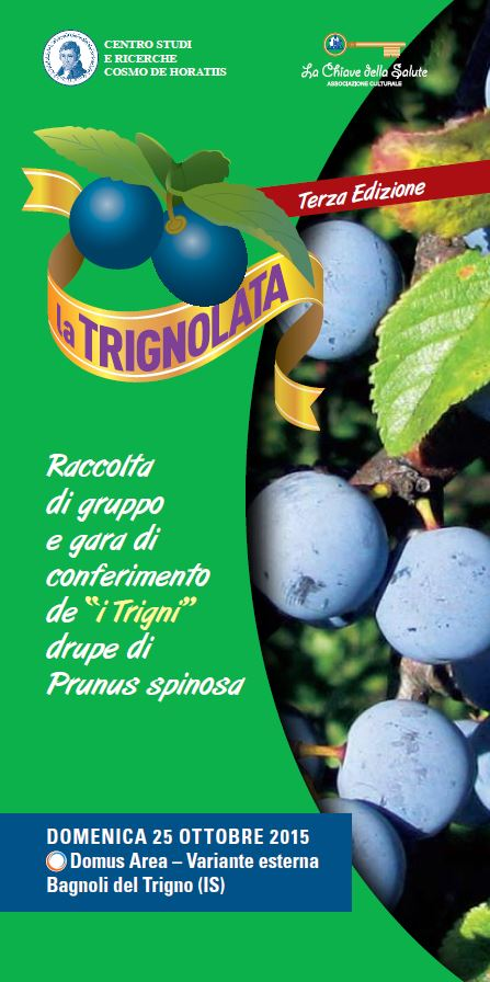 trignolata_6z0ouvxb