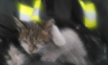 Gattini sepolti dalla neve salvati dai Vigili del Fuoco