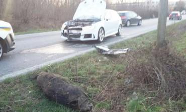 Castel di Sangro, incidente sulla SS 17: automobile distrutta da un cinghiale