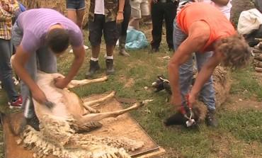 Vita da pastore, il turismo alternativo lo propone la 'Pecorella Nera'
