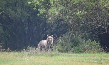 Pnalm, la storia genomica degli orsi pubblicata dalla rivista Pnas