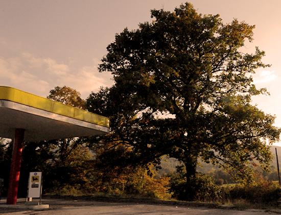 foto albero monumentale