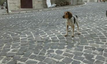 Segugio cerca casa, si trova a Villa San Michele