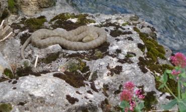"""Pescopennataro, incontro con l'erpetologo su """"Vipere e altri serpenti autoctoni: tutela della specie e prevenzione dei rischi"""""""