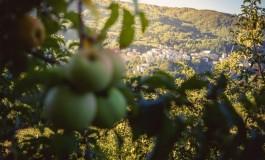 """""""Le Mele degli Orsi"""", promozione delle attività di educazione ambientale a Castel del Giudice"""