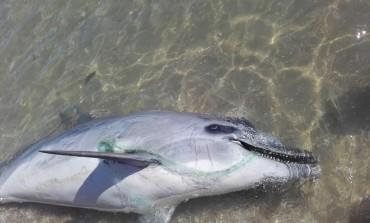 'Plastic free', l'Istituto zooprofilattico di Abruzzo e Molise aderisce all'iniziativa del ministero dell'ambiente