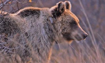 Al via i campi di volontariato nelle terre dell'orso marsicano