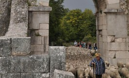 Dall'Associazione molisana 'Transumando' la solidarietà ai pastori della Sardegna