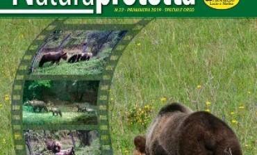 Pnalm, rapporto orso marsicano 2018: popolazione in aumento