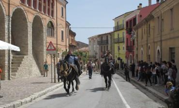 Transumanza d'Italia, i Colantuono riportano la mandria di 300 buoi a Frosolone