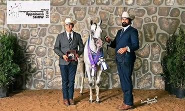 'Championship Appaloosa Horse', Daniele Cerimele alza il vessillo dell'Alto Molise in Olanda
