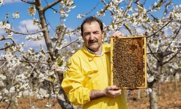 Il miele abruzzese sbanca a Singapore con l'apicoltura Luca Finocchio