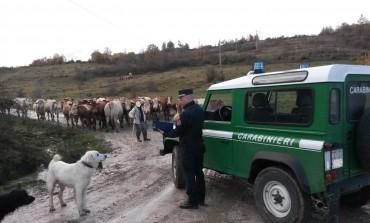 Alto Molise, scarichi abusivi e illeciti amministrativi accertati dai Carabinieri - Forestali