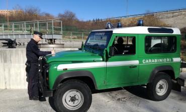 Reati ambientali, Carabinieri Forestali in azione a Carovilli e Agnone