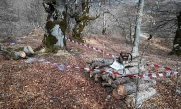 Pescasseroli, taglio abusivo legna: sanzionate e denunciate due persone