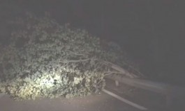 Ateleta, automobilista salvo per miracolo: ha rischiato di essere schiacciato dall'albero