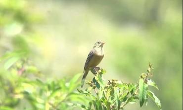 Fauna, in pieno svolgimento la migrazione degli uccelli in Abruzzo