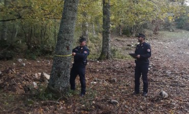 Taglio alberi: tremila euro di multa, Carabinieri Forestali sanzionano ditta campana