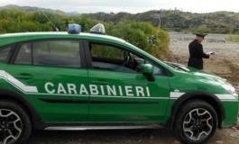 Sversava liquami nel canale, Carabinieri Forestali acciuffano allevatore