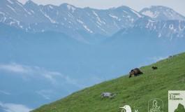 L'Orso e la Formica è il primo progetto multimediale in Italia interamente dedicato all'orso bruno marsicano