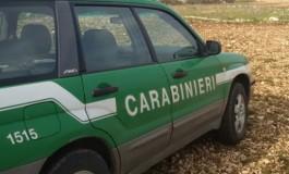 Video trappola di Carabinieri Forestali, acciuffato allevatore di Montenero Val Cocchiara