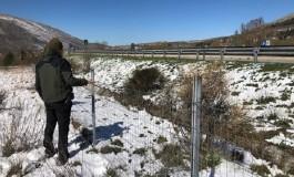 """L'orsa Amarena attraversa l'autostrada A25, Direttore del Parco """"Adottare misure precauzionali urgenti"""""""