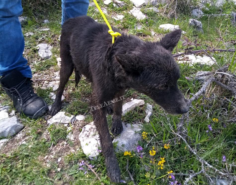 cane caduto nella buca