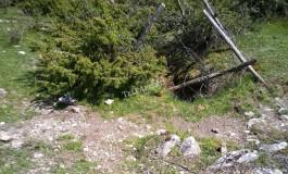 Cane caduto dentro la buca, salvato dai Carabinieri Forestali e Vigili del Fuoco