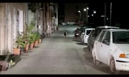 Orso a Castel di Sangro, il video spopola sul web