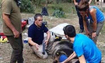 L'orso Juan Carrito si rifugia in grotta per un malore, intervengono i Carabinieri Forestali