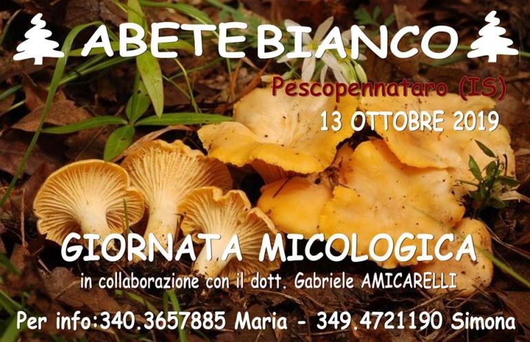 Pescopennataro, giornata micologica al Parco dell'Abete Bianco