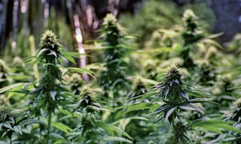 """""""L'etica della cannabis terapeutica nella sanità moderna"""", convegno a Campobasso"""