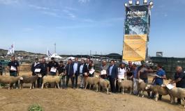 """L'azienda della capracottese Giuliana Fiadino vince la mostra della razza ovina """"merinizzata"""" a Matera"""