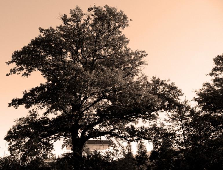 Il senso della vita abbracciando un albero monumentale