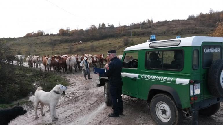 Alto Molise, scarichi abusivi e illeciti amministrativi accertati dai Carabinieri – Forestali