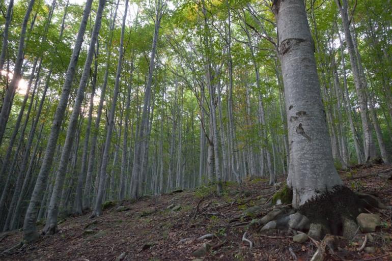 Pnalm, le faggete vetuste patrimonio Unesco