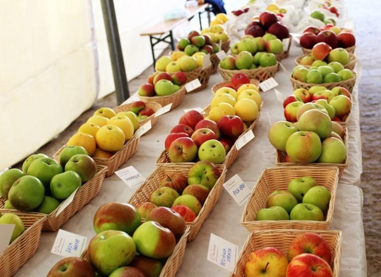 La Festa della Mela a Castel del Giudice, sapori autentici con l'agricoltura biologica
