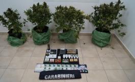 Carabinieri a caccia di droga: sequestri di hashish, marijuana e cannabis