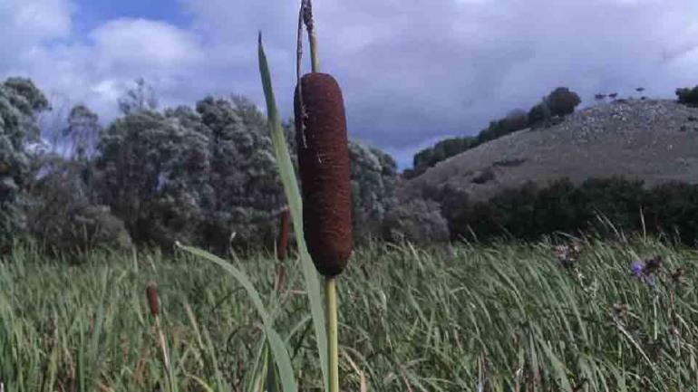 A Montenero Val Cocchiara scoperti pollini e minerali di 20.000 anni fa