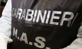 """l'Alberghiero di Roccaraso precisa:"""" Piena collaborazione con i Nas"""""""
