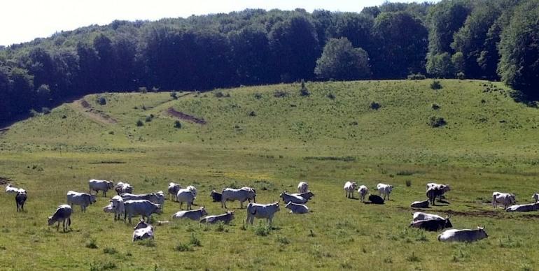 Parco della Majella, scarsa vigilanza: la denuncia del mondo ambientalista