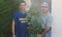 Coltivazione casalinga di cannabis, denunciato un ventitreenne