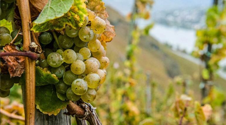 """Ais Isernia, seminario sul """"Riesling della Mosella: il vino immortale"""""""