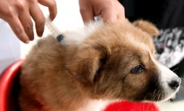 Vaccinazioni gratuite per cani a Capracotta e Castel del Giudice