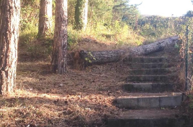 Agnone, sfiorata la tragedia al Caracciolo: cade albero vicino all'ospedale