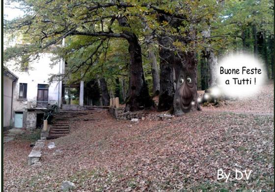 """Polemiche e scontri su Facebook ma Caruso chiarisce: """"Perseguiremo chi ha abbatuto l'albero"""""""