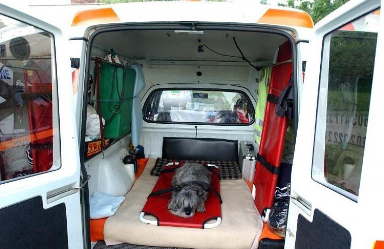 Tutti giù per terra – Il cane sta male: arriva l'ambulanza
