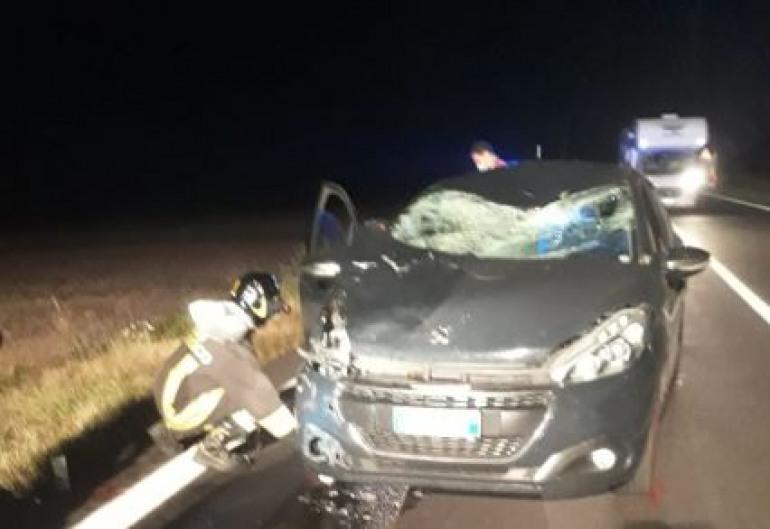 Incidente sul Piano delle Cinquemiglia, automobilista investe un cervo: grave il passeggero